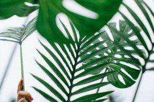 Kliederkerk thuis (Palm)Pasen viering